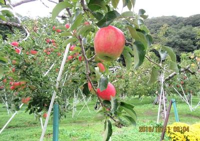 りんご-aIMG_0644.jpg