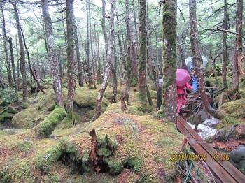 苔の森aIMG_1071.jpg
